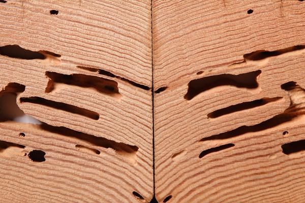 diagnostic immobilier termites a montpellier h rault aeb expertises. Black Bedroom Furniture Sets. Home Design Ideas